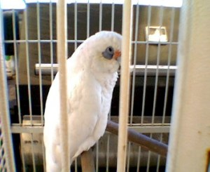 What we were told was liberation turned out to be trivialization.http://commons.wikimedia.org/wiki/File:Unidentified_Corella_in_a_cage.jpg
