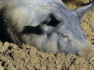 """Pigs. Pretty much everywhere we looked, hiding behind apparently benign words like """"gelatin"""" or unfamiliar chemical compound-ish words like """"diglycerides."""" Ugh."""